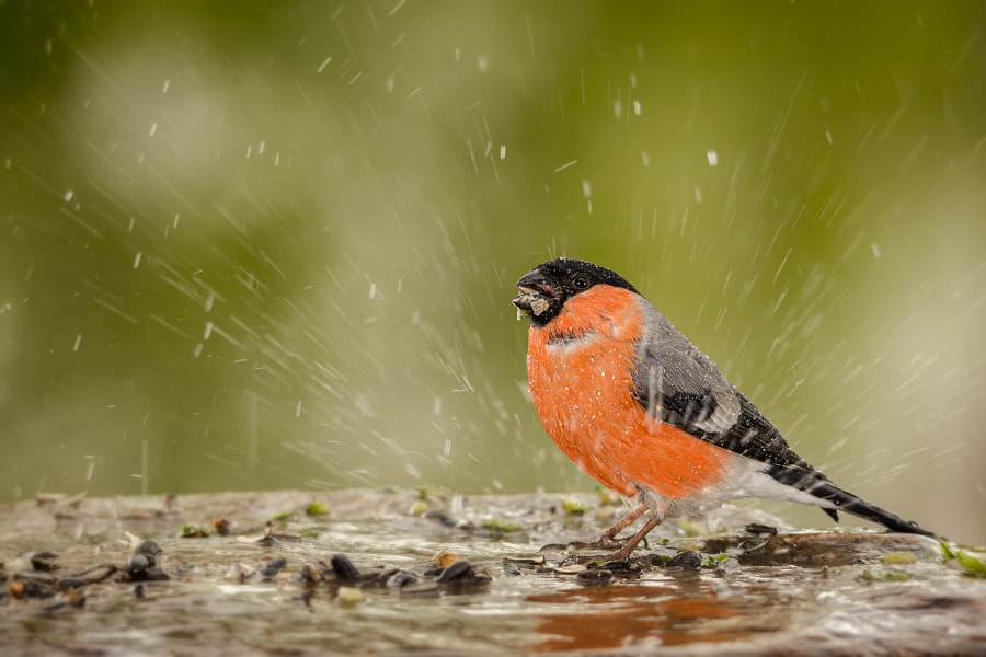 more then rain by Geert Weggen on 500px.com