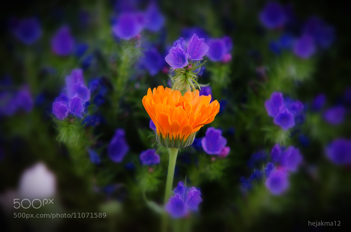Photograph color contrast by hejakma  . on 500px