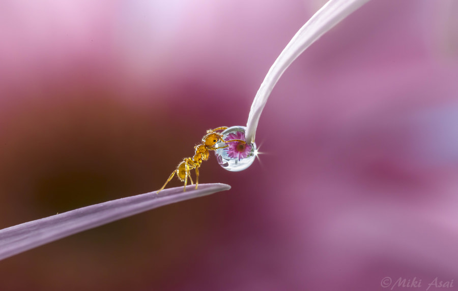 Tiny Warrior by Miki Asai