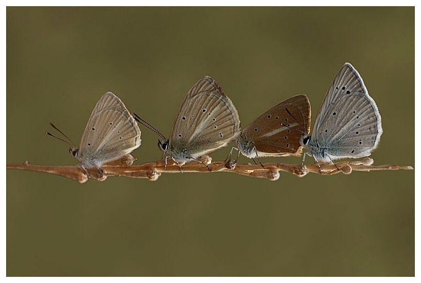 Photograph Butterfly army.. by Bulent Pekardan on 500px