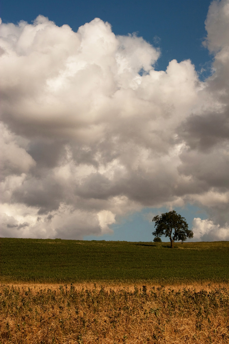 Photograph Summer Field Study by Zoritza Williams on 500px