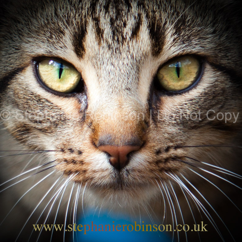 Photograph Cats Eyes by Stephanie Robinson on 500px