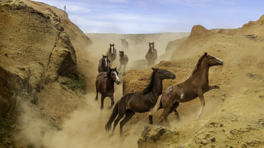 Wild horses galoping in the canyons of Rano Raraku by Heather Balmain on 500px