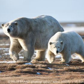 Walking Close with Mom by Frank Hildebrand / HILDEBRAND photography (HILDEBRAND-photography)) on 500px.com