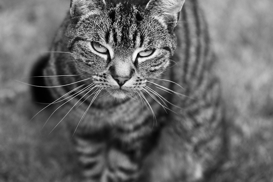 Photograph Buffy Posing by Stuart Crawford on 500px