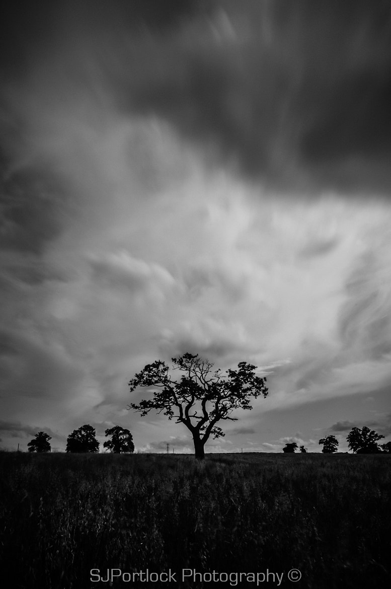Photograph Stand Alone Tree by Stephen Portlock on 500px