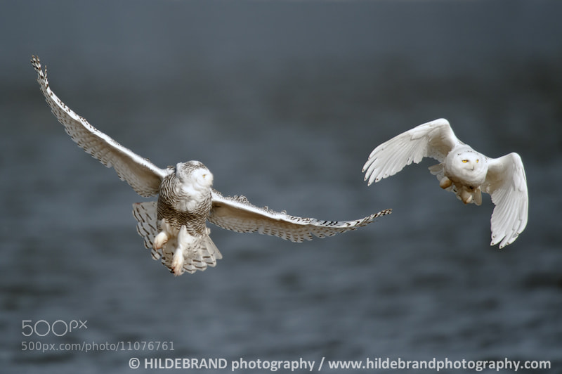 Photograph Wing Man by Frank Hildebrand / HILDEBRAND photography on 500px