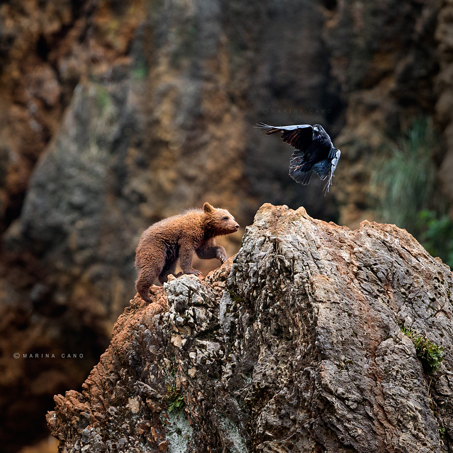 The Bird and the Bear by Marina Cano on 500px.com