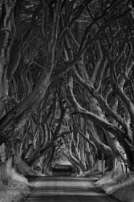 Photograph The Dark Hedges 2 by Karen Messick on 500px