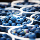 Постер, плакат: Blueberries