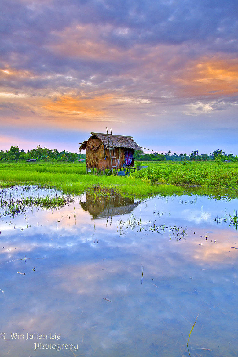 Photograph Paddy by Erwin Julian Lie on 500px
