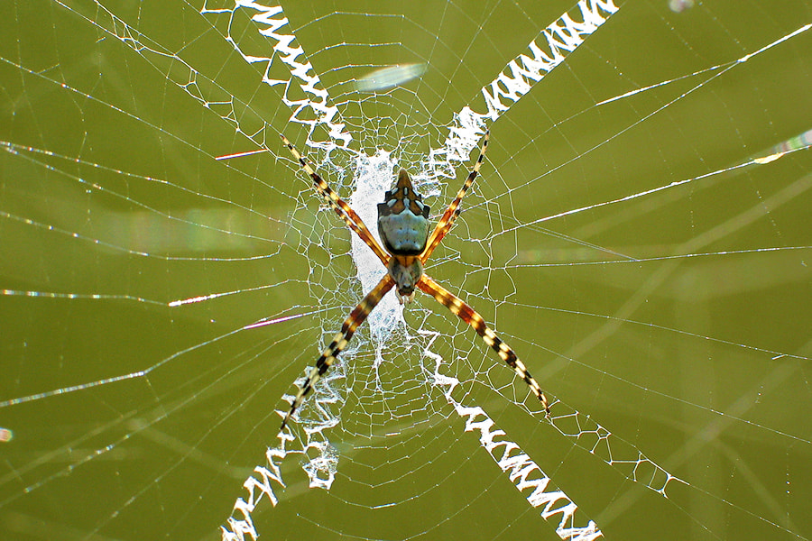 Photograph The Spider and its Web by Carlos Gotay on 500px