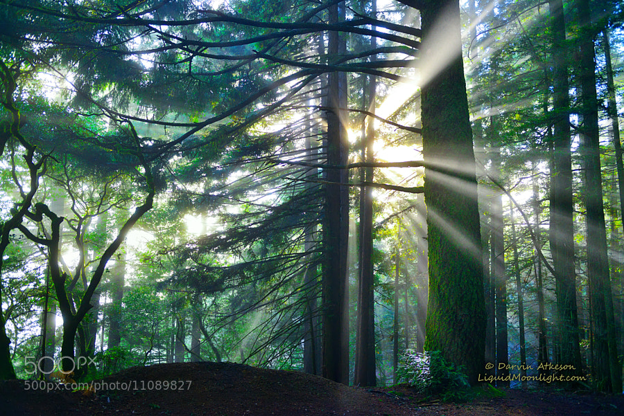Photograph Light Rays - Mt. Tamalpais  by Darvin Atkeson on 500px