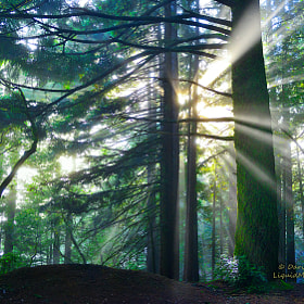 Light Rays - Mt. Tamalpais  by Darvin Atkeson (Darvin)) on 500px.com