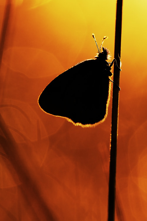 Photograph butterfly in the sun by Manfred Huszar on 500px
