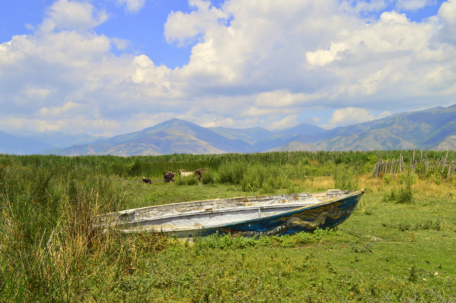 Photograph abandoned fishing boat on a summery lake shore by Papanikolaou Joanna on 500px