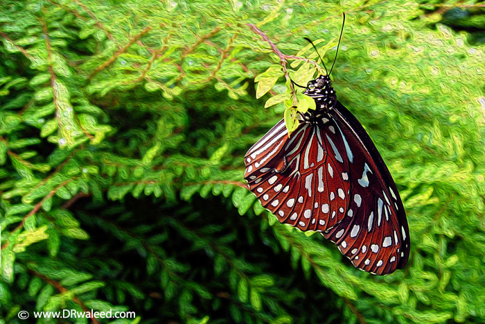 Photograph butterfly  by Waleed AlShumrani on 500px