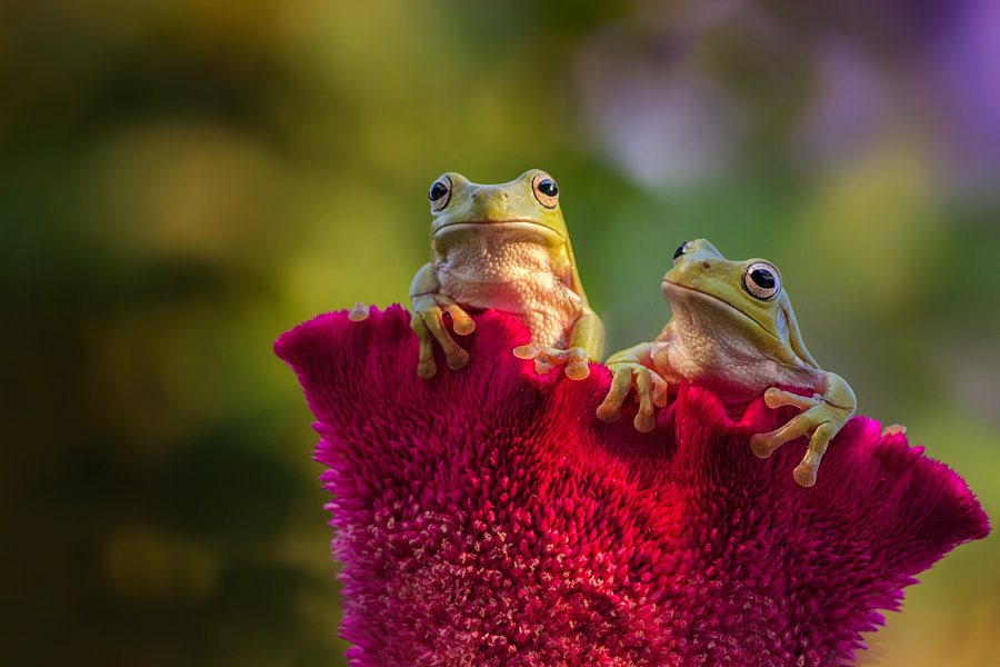 Photograph You and Me by Ellena Susanti on 500px