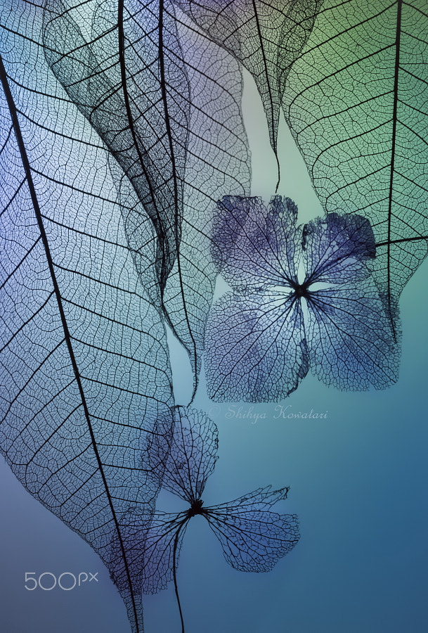 Photograph Story of leafs and flowers by Shihya Kowatari on 500px