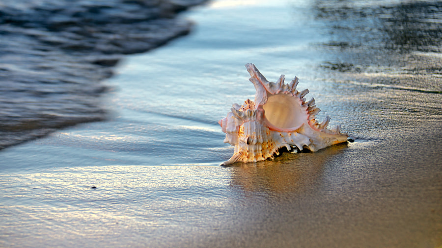 Shell I by Eduard Gorobets on 500px.com