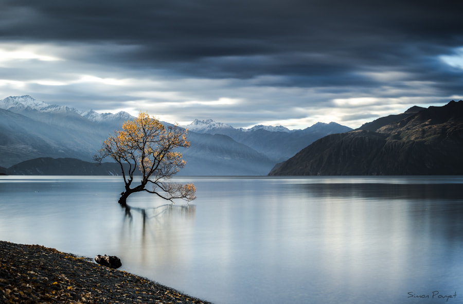 The Famous Tree by Simon Pouyet on 500px.com
