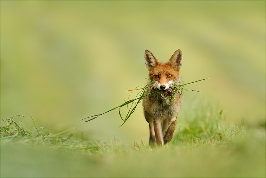 Photograph Transporter by Ingrid Lamour on 500px