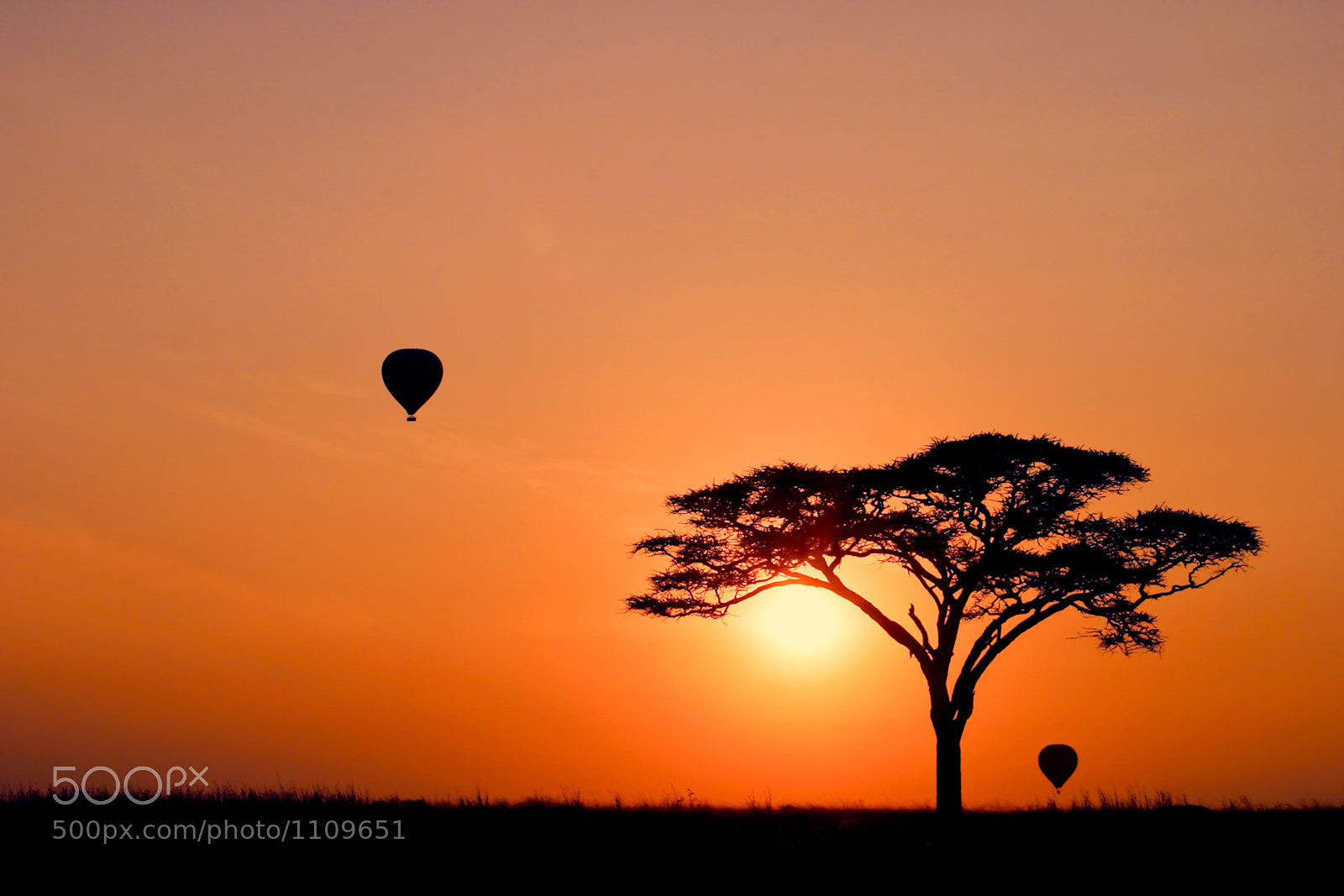 Photograph New Day in Serengeti by Mario Moreno on 500px