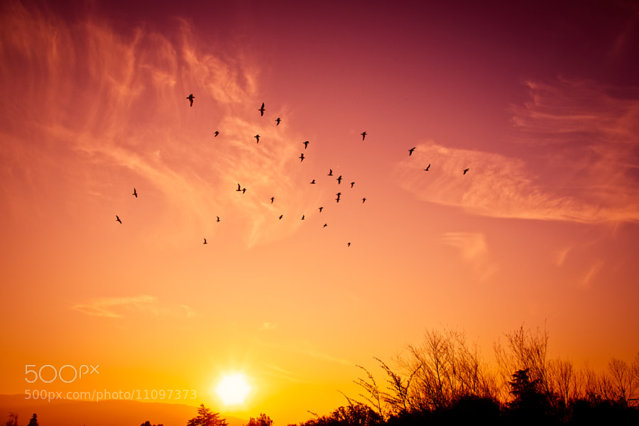 Photograph South Bird Flight by Jherell Rabanal on 500px