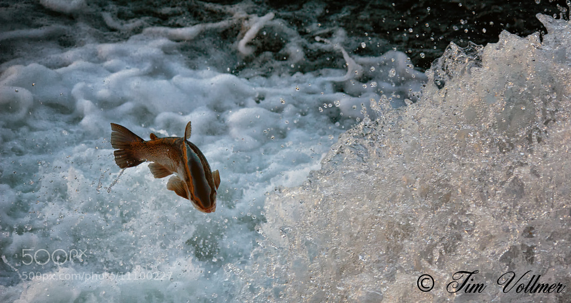 Photograph Jumping up the waterfall. by Tim Vollmer on 500px