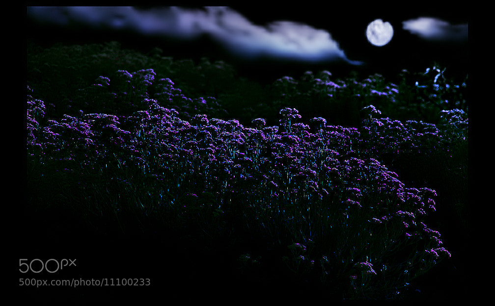 Photograph M...y  Night  by EMERALD WAKE © on 500px