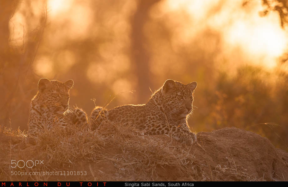 Photograph Waiting for Mom by Marlon du Toit on 500px