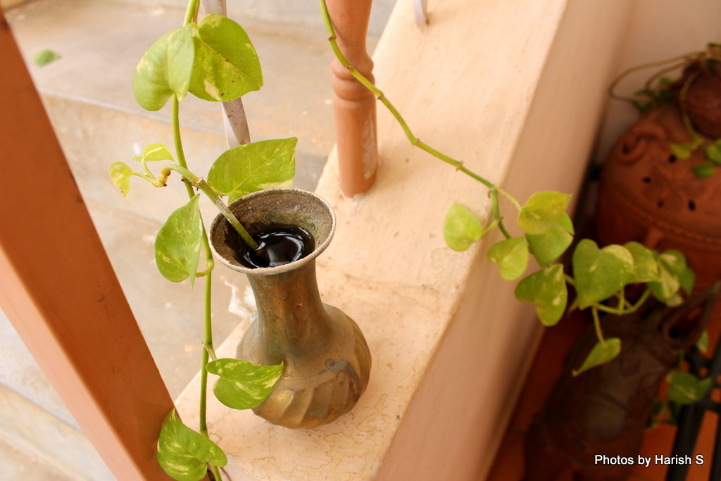 Photograph Water Pot by Harish Suresh on 500px