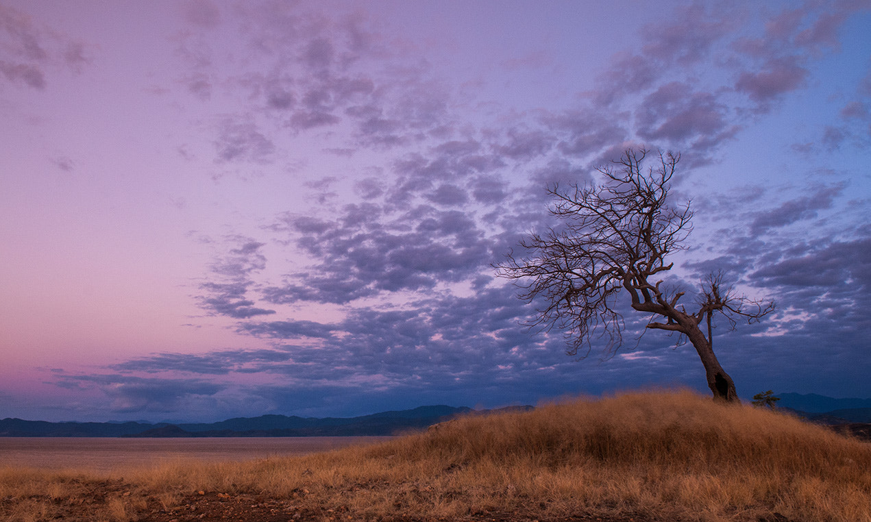 Photograph A lonely tree by Arthur Fuse on 500px