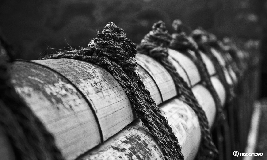 Photograph Knotted by Eugene W on 500px