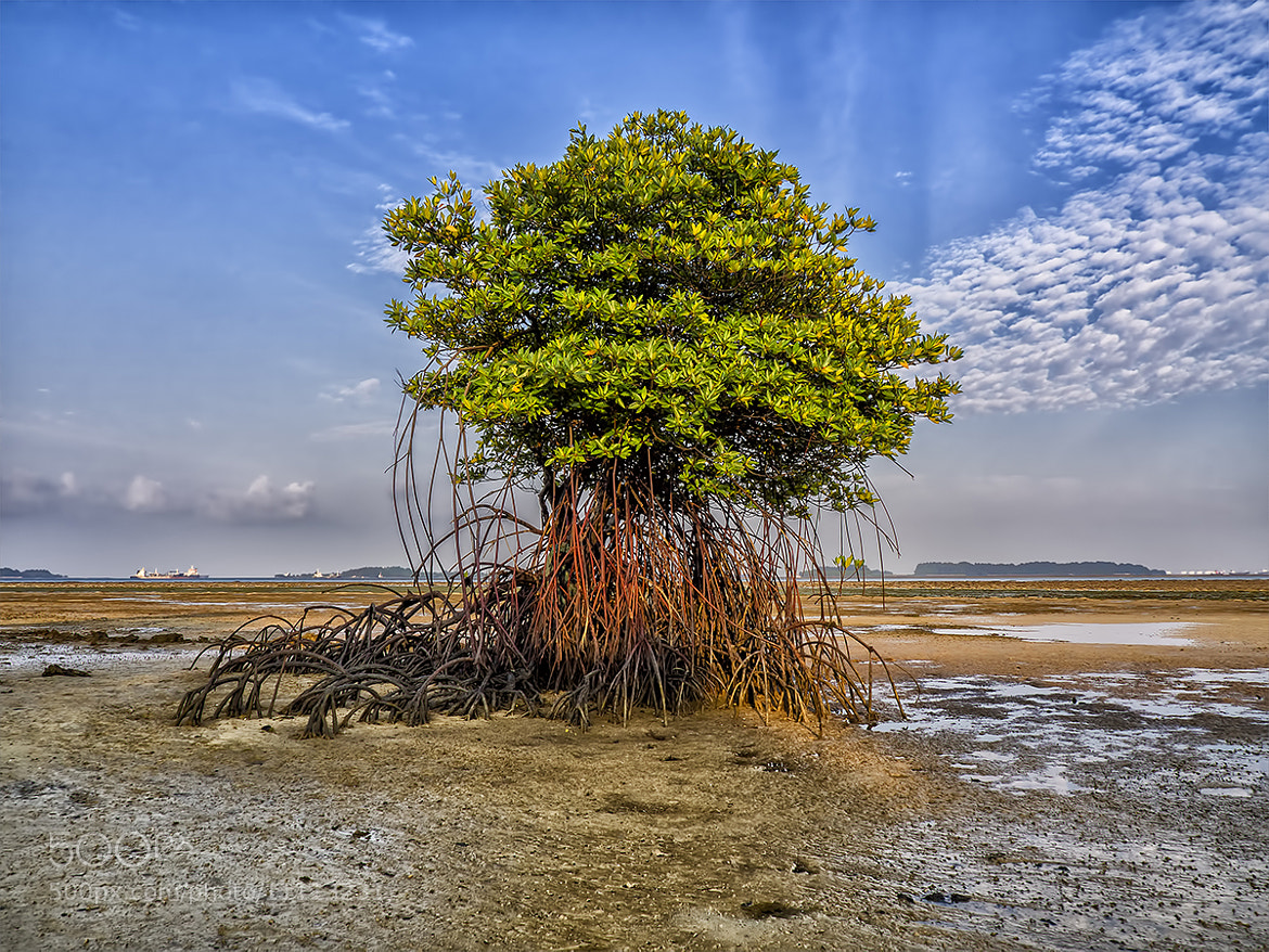 Photograph Standing Alone by Partha Roy on 500px