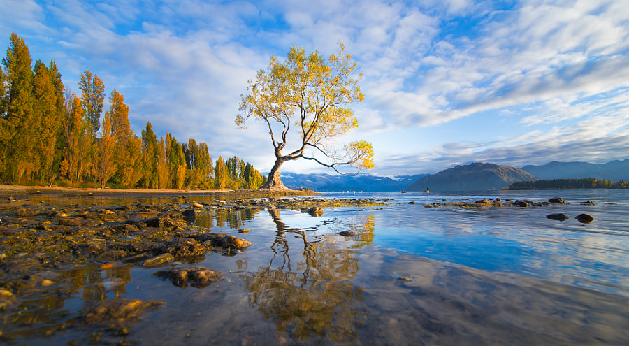 Photograph Wanaka's Willow by Jesse Summers on 500px