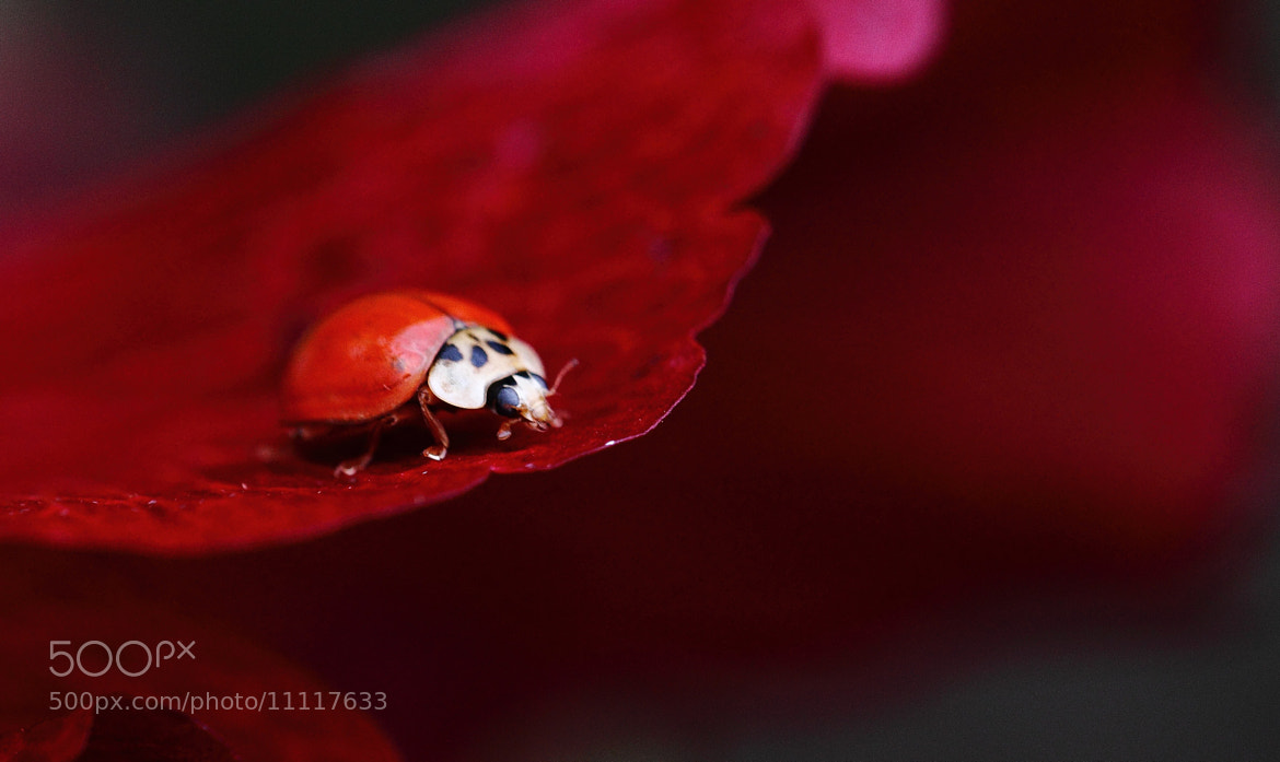 Photograph Shades of Red by Steve Adams on 500px
