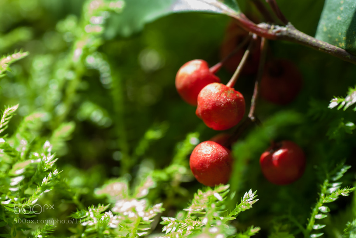 Photograph Red Fruit by Hei Yu on 500px
