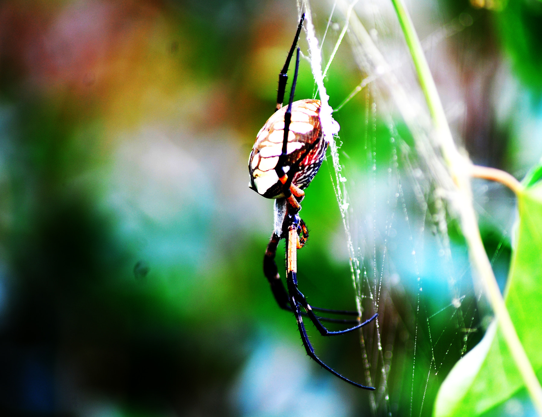 Photograph itsy bitsy spider  by Candace  Knight  on 500px