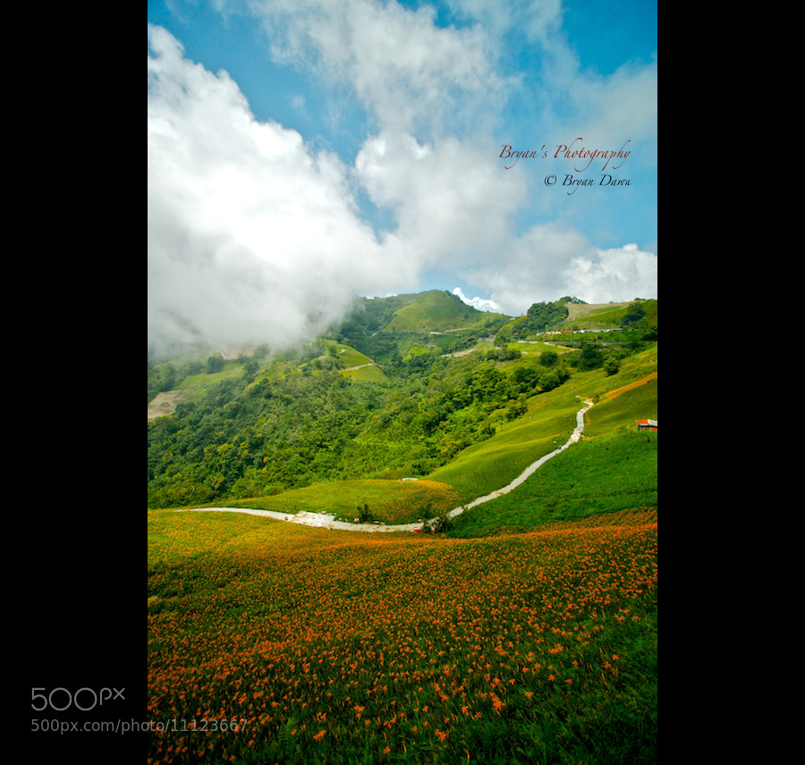 Photograph Daylily / Taitung by Bryan Dawn on 500px