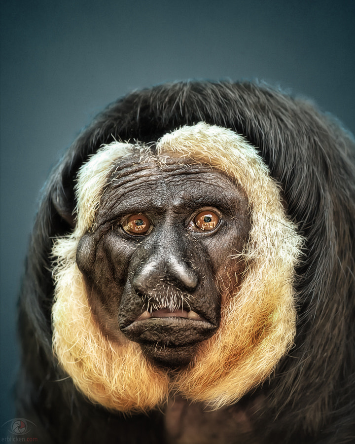 Photograph Animal Personality: White-faced saki Guilherme by Manuela Kulpa on 500px