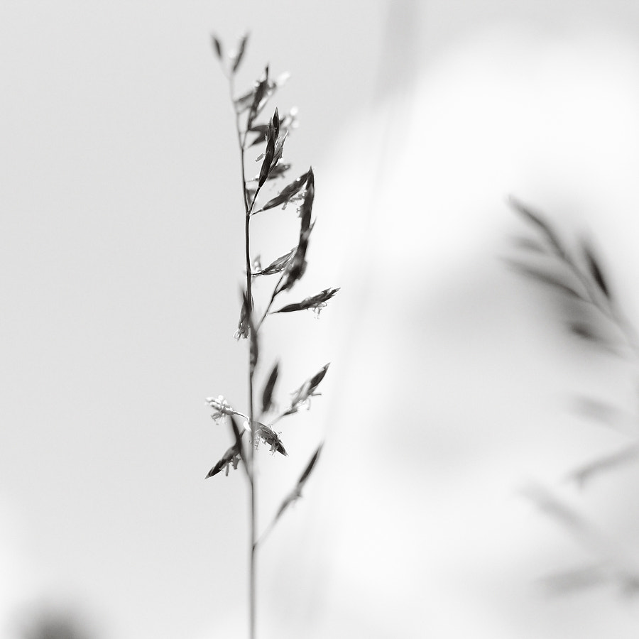 Photograph Grass by Ulf Buschmann on 500px