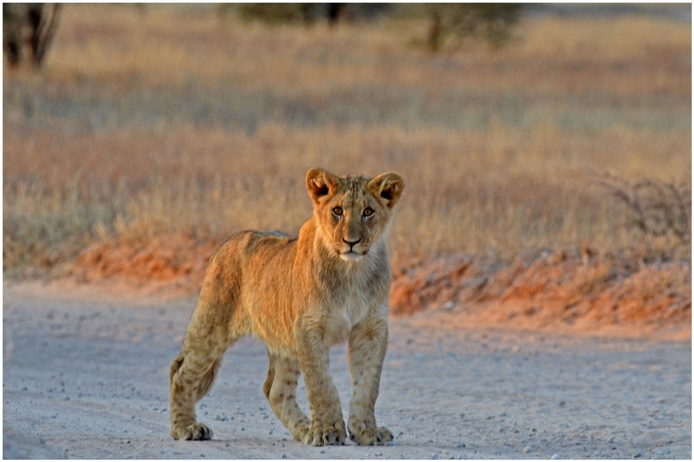 Photograph Yes, I will be KING  by Christopher van Zyl on 500px