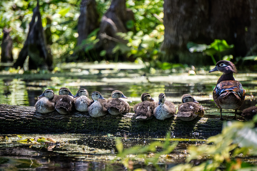 Photograph The Brood by Rob Hanson on 500px
