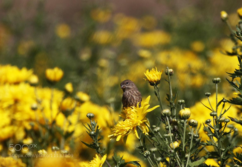 Photograph Field flowers and bird by Cristobal Garciaferro Rubio on 500px
