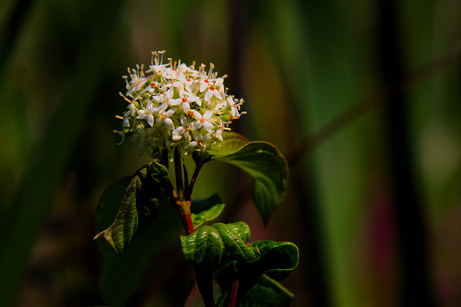 Photograph White Flowers by Scott Brodersen on 500px
