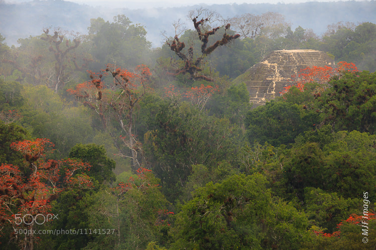 Photograph Tikal in the Mist by Michael Flaherty on 500px