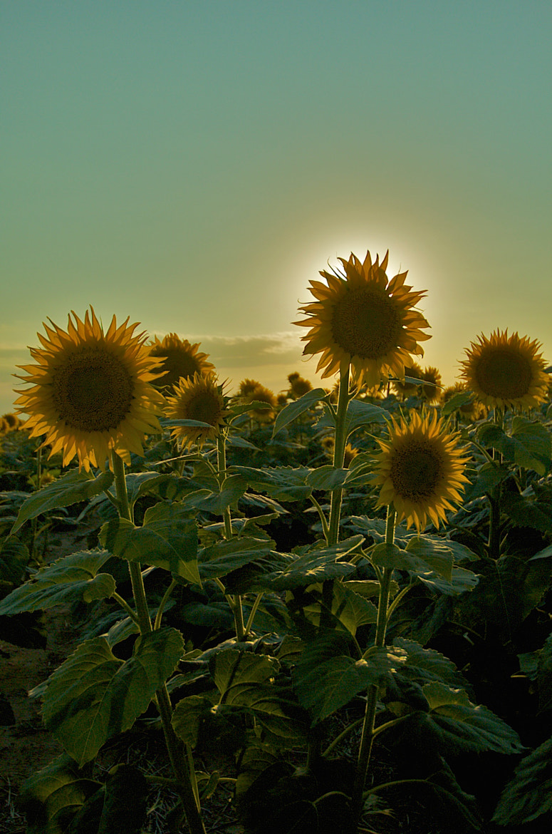 Photograph An aura of warmth by Loree Keeble on 500px