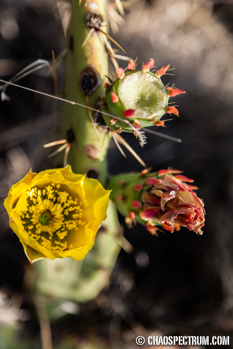 Photograph Cactus in the Morning Sunshine by Marvin Chao on 500px