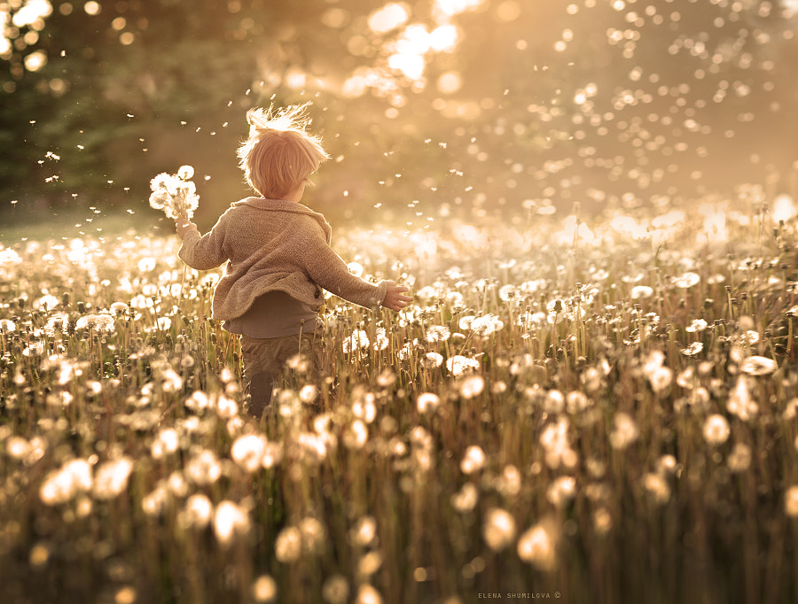 summer wind... by Elena Shumilova on 500px.com